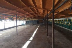 Farm for rent or sale Nicosia 1