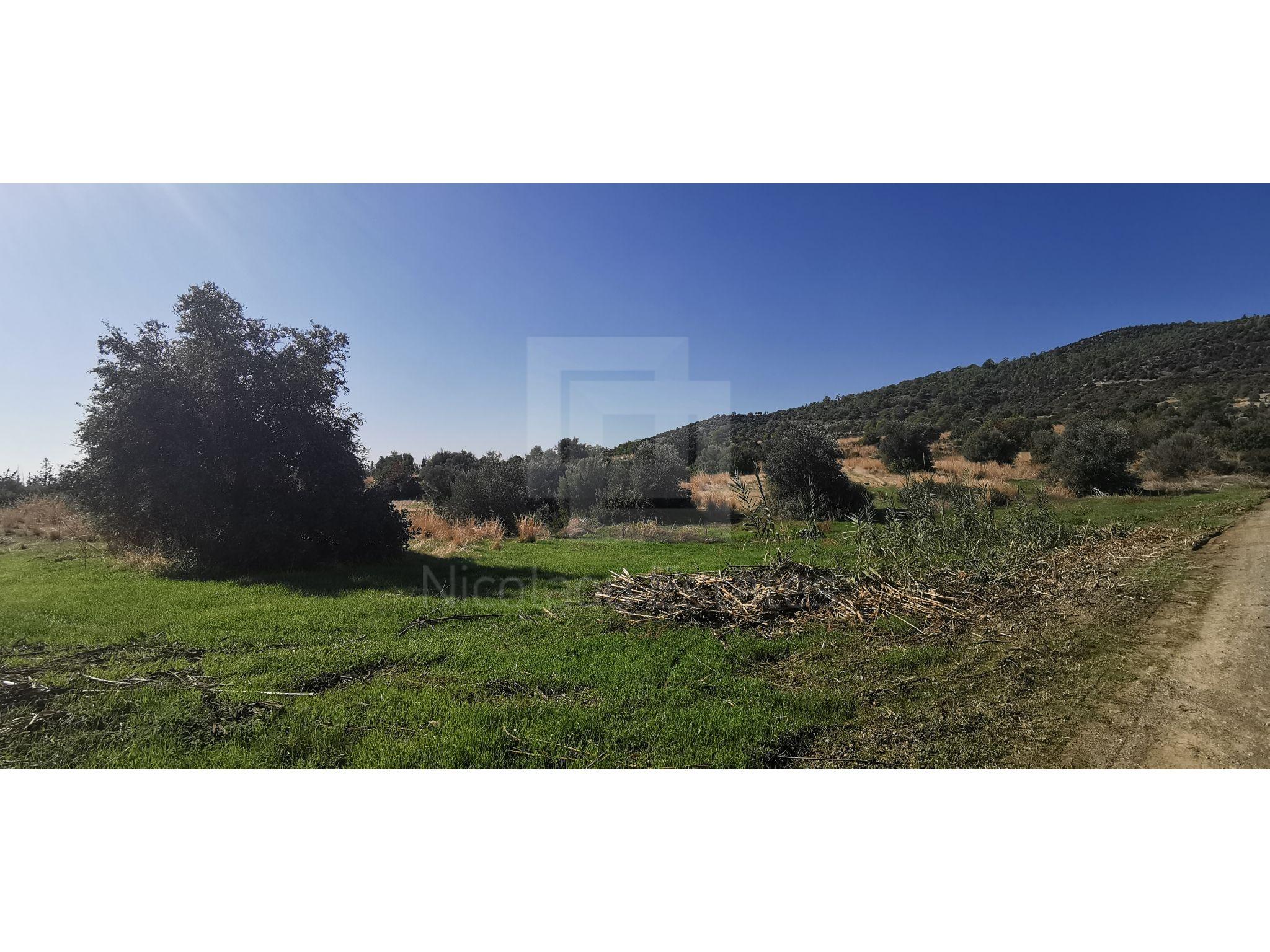 Large Field for Sale in Parekklisia village of Limassol